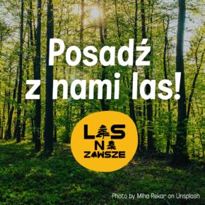 Las dla człowieka - Webinar z Fundacją Las Na Zawsze